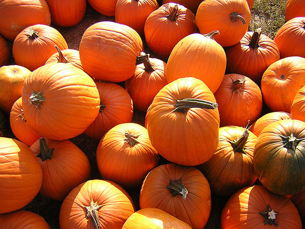 Orchards and Patches: Apple and pumpkin picking spots