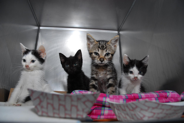 New York City Animal Care & Control Department to launch adoption center