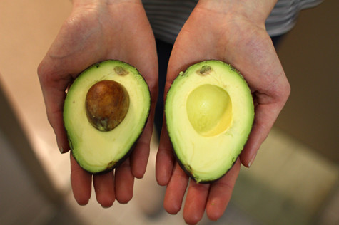 Climate change, beetles present problem for avocado products