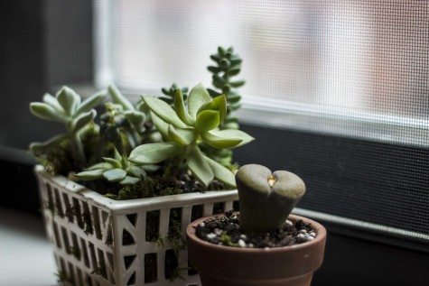 Turn Your Dorm Green This Spring