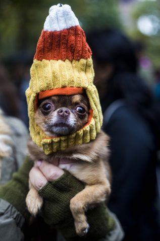 Exposure | 2016 Tompkins Square Halloween Dog Parade
