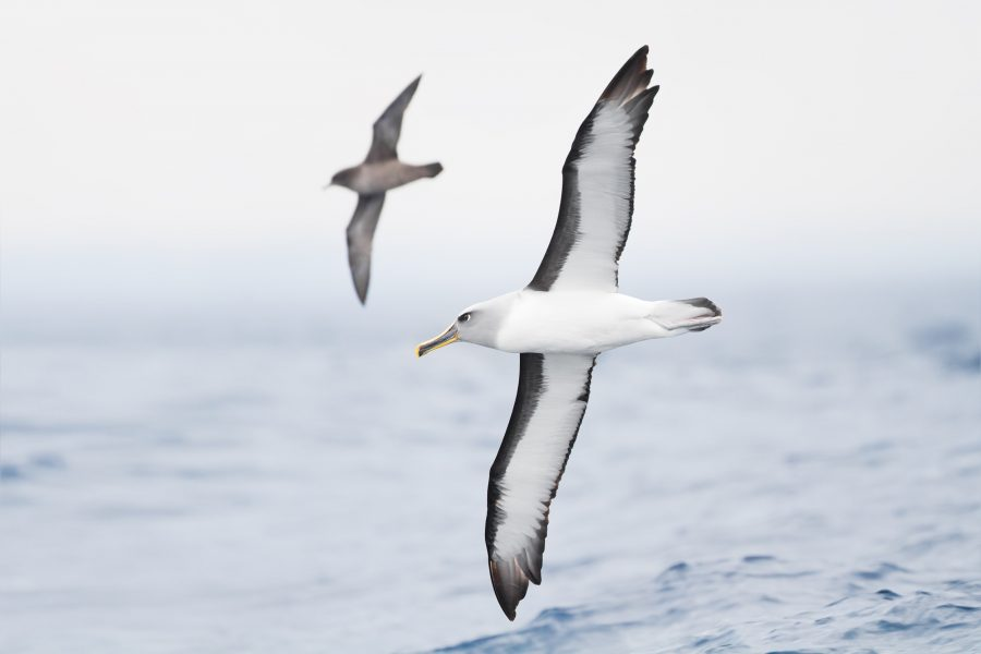 A+dozen+albatrosses+were+slaughtered+and+photographed+dead+in+Kaena+Point+Natural+Area+Reserve+in+2015.+Tisch+sophomore+Christian+Gutierrez+has+been+charged+with+the+crime+along+with+two+others%2C+who+are+minors.