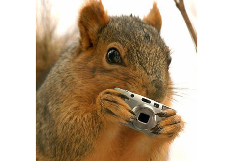 NYU goes nuts for gossip squirrel