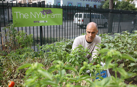 NYU Farm Lab teaches agricultural awareness