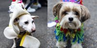 Exposure | Halloween Dog Parade