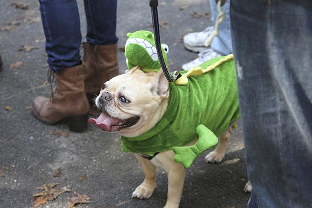 Dogs march in costume at Halloween Dog Parade