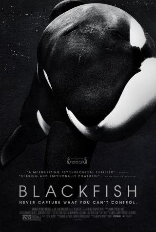 'Blackfish' writer talks animals, tech