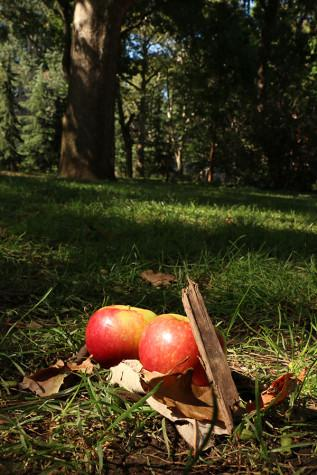 Four spots to go apple-picking this fall