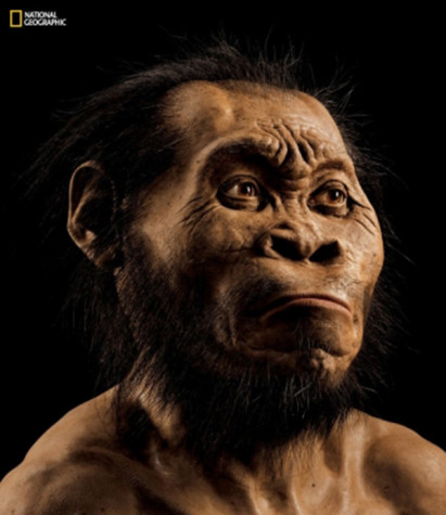 NYU anthropologist discovers new human ancestor