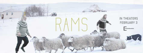 Battle of Brothers and Sheep in Lyrical Film 'Rams'