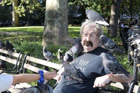 Our Nearest Neighbors: Pigeons