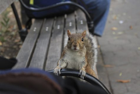 Tails of Washington Square Park