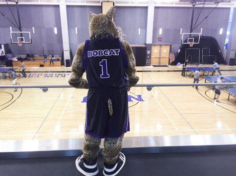 Unmasking the NYU Bobcat