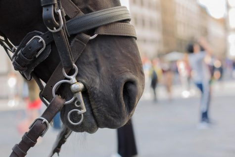 Exposure | Troubles of Tourism: Cruelty of Exploiting Horses for Carriage Rides