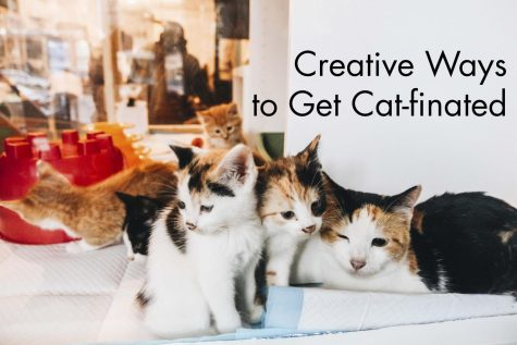 Creative Ways to Get Cat-finated
