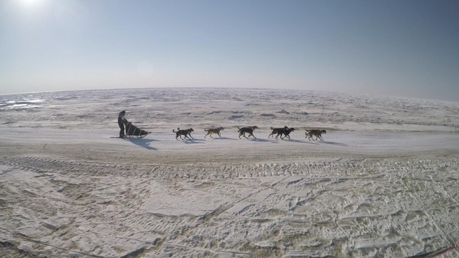 "A scene from the documentary ""Sled Dogs"" by Fern Levitt shows the hardships of the dog sledding competition."