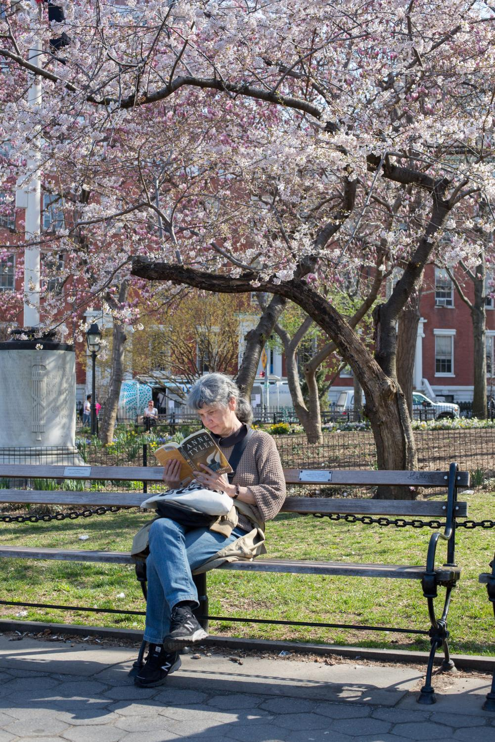 A woman reads a book under a cherry blossom tree in Washington Square Park.